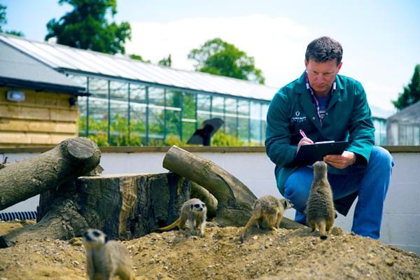 A lecturer observing meerkats in the Hartpury animal collection